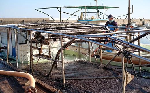 船の水槽いっぱいの生海苔を工場に送り、板海苔に加工します