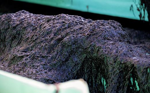 船の水槽いっぱいの生海苔