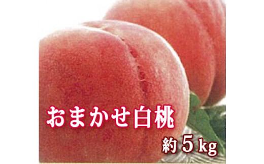 F-05021 山形県河北町産種類おまかせ白桃5kg