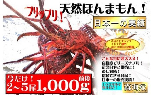 S136【ニコニコエール品】活〆伊勢海老(鮮度抜群冷凍)1000g前後+ゆず果汁付き
