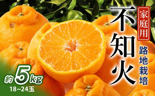 【家庭用】不知火 5kg(18玉~24玉)路地栽培 津志田果樹園 果物