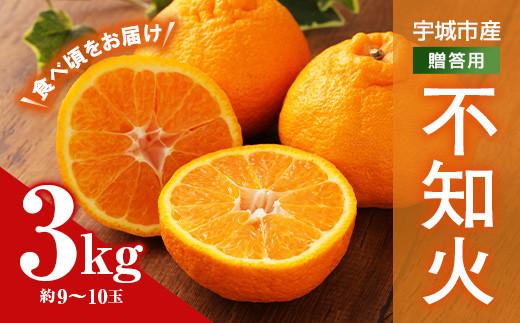 宇城市産 贈答用 不知火 3kg(約9~10玉)うちやま果樹園 柑橘