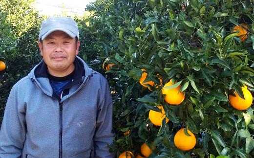 不知火 約10kg(40玉前後)ひがし果樹園 宇城市産 果物 フルーツ