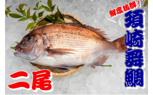 【期間限定!】漁師自慢の逸品「須崎舞鯛」 2匹分 お刺身用