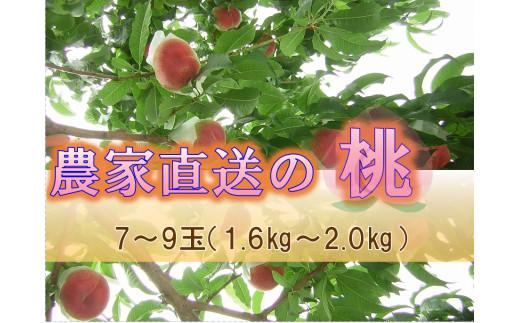農家直送の桃7~9玉(約1.6kg~約2.0kg)[2021年先行予約](UF)