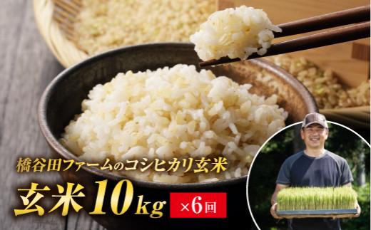 橋谷田ファームのコシヒカリ 玄米10kg