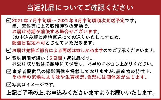 【7月~8月発送】宇城市産 シャインマスカット 約2kg(2~5房)