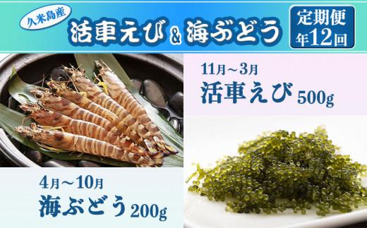 【定期便】海ぶどう(4~10月)・活車えび(11~3月) 年12回
