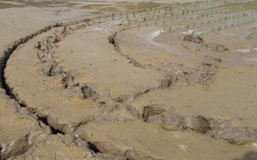 粘土質の土と2つの山系からもたらされる水、太陽が育んだお米です!
