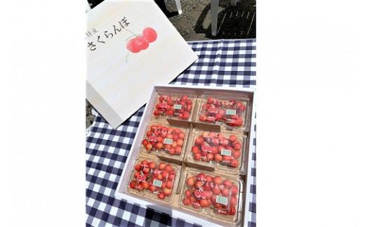 0010-2101 さくらんぼ(佐藤錦)1.2kg ご家庭用
