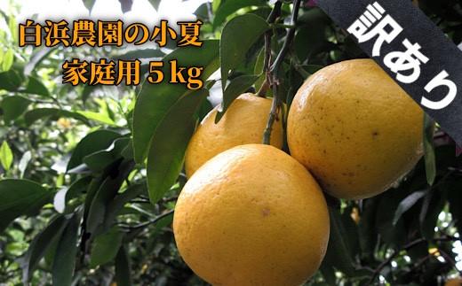 【AE-31】訳あり家庭用小夏5キロ(白浜農園)