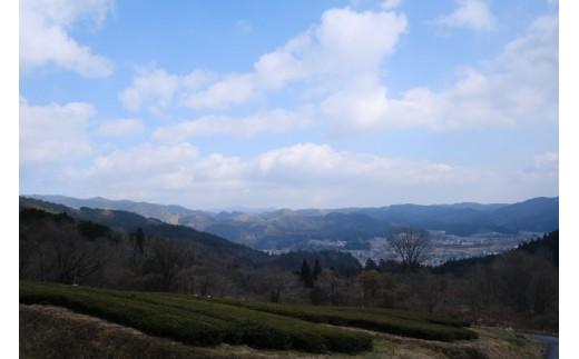 新見市大佐地域を見渡せる山すそに紅茶農園はあります