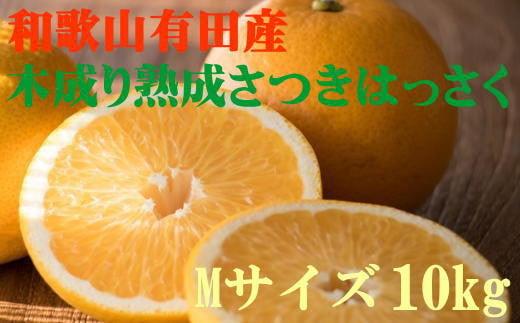 こだわりの和歌山有田産木成り熟成さつき八朔 10kg(Mサイズ) ※2022年4月上旬より順次発送