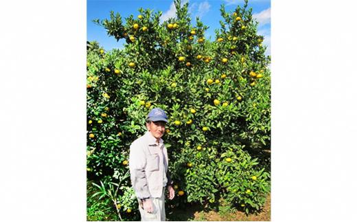 [№5227-0189]幻の果実 花良治(ケラジ)みかん 約1.3kg