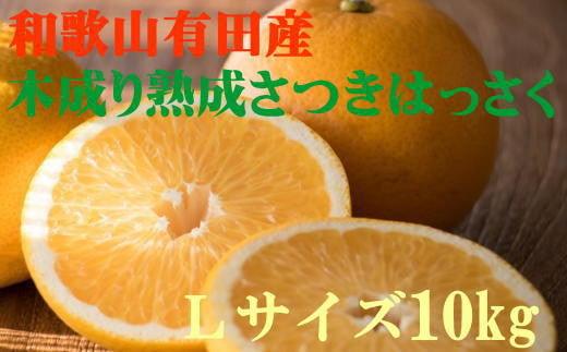 こだわりの和歌山有田産木成り熟成さつき八朔 10kg(Lサイズ) ※2022年4月上旬より順次発送