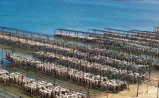 牡蠣は、厳しい自然や水温・潮流の変化にさらされながら成長します。
