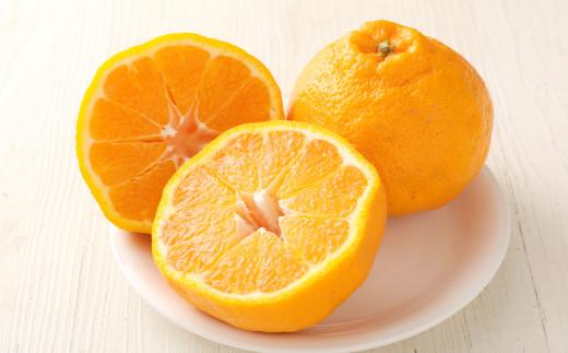 路地栽培 元祖不知火 約5kg(16~22玉)家庭用 果物 柑橘