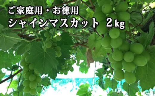 B-08521 【ご自宅用】山形県河北町産シャインマスカット2kg