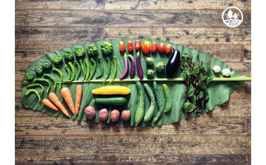 [№5735-0396]瀬戸内産 旬の野菜セット