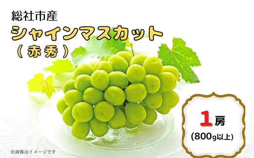 21-020-001.総社市産シャインマスカット(赤秀)