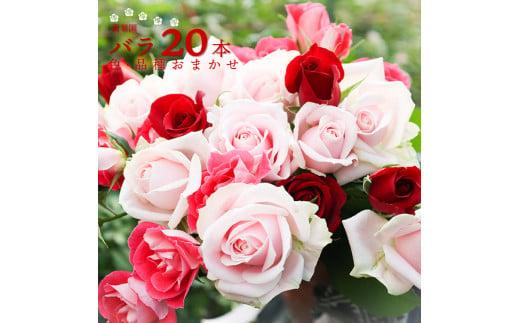 17 萬華園のバラ 赤系 20本