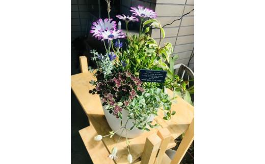 季節の草花鉢植えおまかせアレンジ 1鉢_M162-001