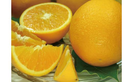 バレンシアオレンジ[約5kg]湯浅町田村産春みかん春かんきつ(無選別・果実サイズ混合)