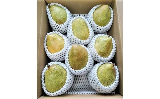 0042-2004 西洋梨(マルゲリット・マリーラ)3kg 8玉 ご家庭用