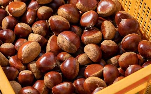 流通している多くの栗は、くん蒸による殺虫処理が行われますが、無くん蒸栗は、栗本来の甘さと風味がお楽しみいただけます。
