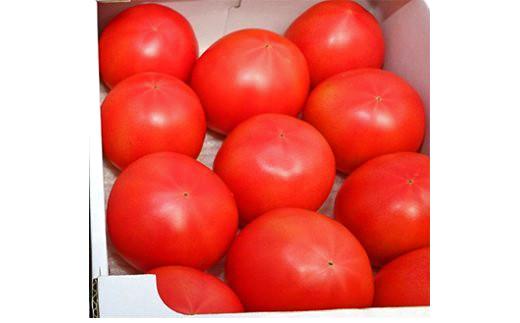 [№5672-0482]甘熟トマト『白岡の太陽』約2kg