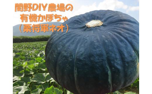 【栗将軍ネオ】甘くてほこほこ!関野農場の有機かぼちゃ(北海道赤井川村産)
