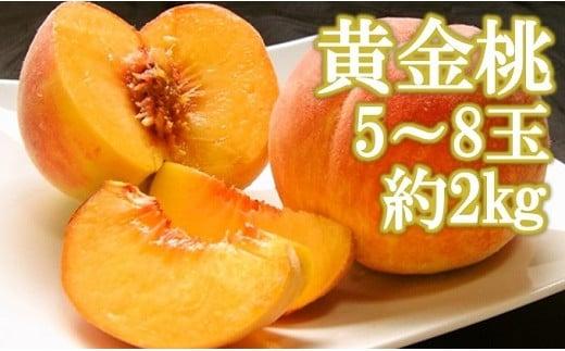 朝もぎ直送「黄金桃」5~8玉 【高機能共選機使用】選び抜かれた桃