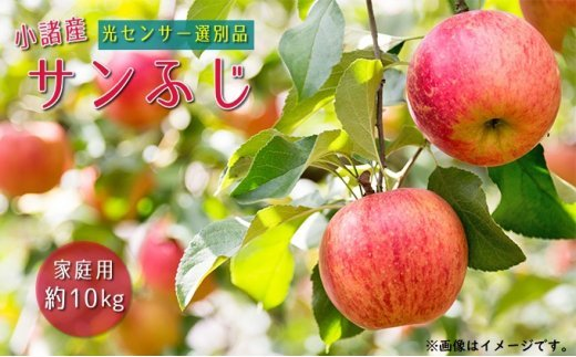 [№5915-0741]信州小諸産 サンふじりんご 家庭用 約10kg