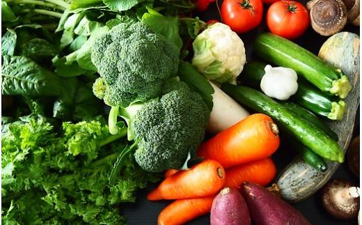 K1665  季節の野菜 「道の駅さかいオリジナル」駅⻑おすすめ野菜セット