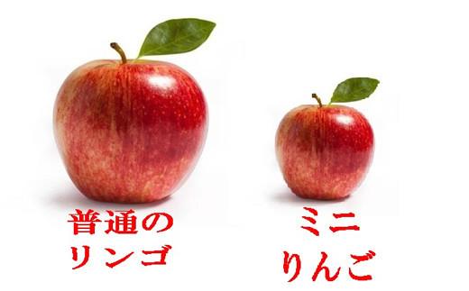 No.1118 【先行予約】りんご ミニりんご 3kg(12~15個)