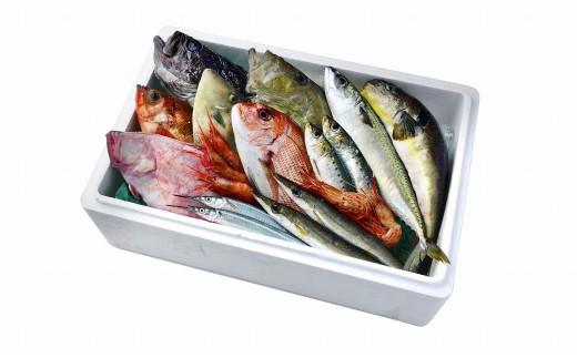 旬の鮮魚をお届けします(魚種の指定不可) ※画像はイメージです