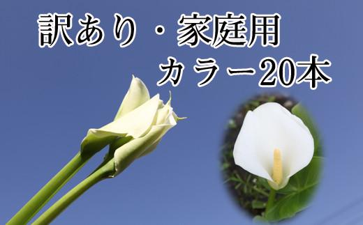 写真右側のように綺麗に花が開きます。