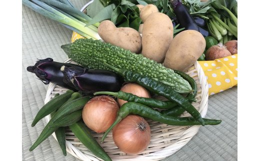 6ヵ月定期便【栽培期間農薬不使用】季節の野菜ハーフセット(6~7品)