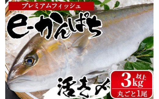 AG-CD1 東京オリンピック供給資格「AEL(養殖エコラベル)」認証取得のカンパチ!活き〆プレミアムフィッシュ「e-かんぱち」丸ごと1尾(ラウンド・3.0kg~3.8kg)【丸栄水産】