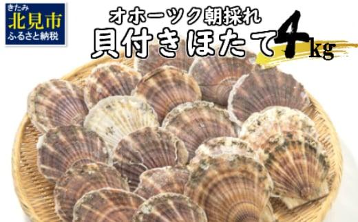 【A-027-06】◆2021年6月より発送◆オホーツク朝採れ貝付きほたて4kg(25枚~40枚)