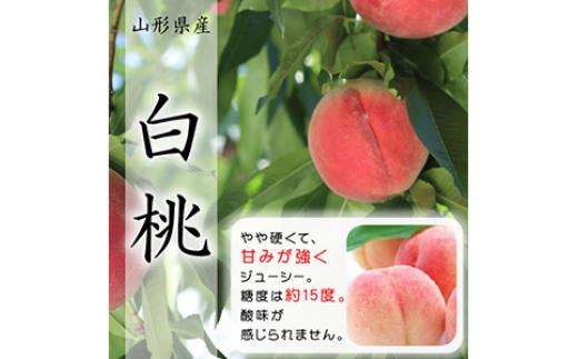 山形県産白桃3kg《令和3年産》 F2Y-1609