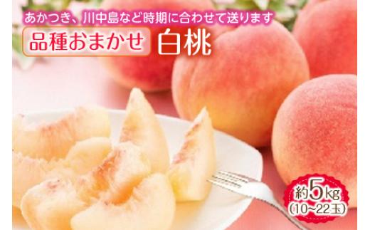 白桃 約5kg 10~22玉 品種おまかせ F2Y-1346