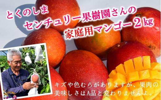 徳之島センチュリー果樹園の勝さんが大切に育てた完熟マンゴー(※家庭用)です。