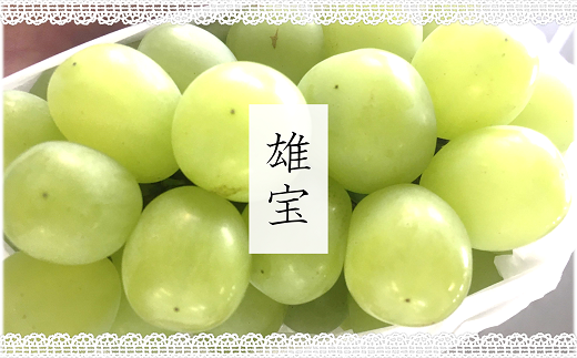 1207 【9月頃~発送予定】大粒種無しの緑系ぶどう『雄宝』1房(700g以上)