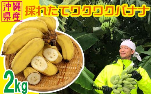 【沖縄県産バナナ】採れたてワクワクバナナ 2kg