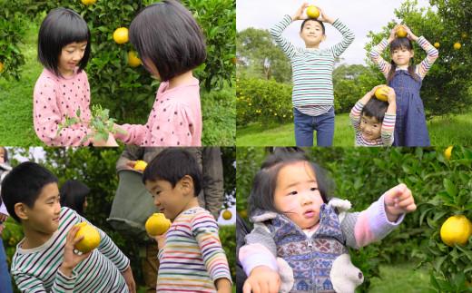 路地栽培 元祖不知火 約3kg(9~10玉)玉揃え 贈答用 果物 柑橘