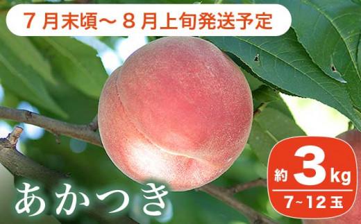 A-4 根強い人気の桃の定番品種 あかつき(白桃)約3kg