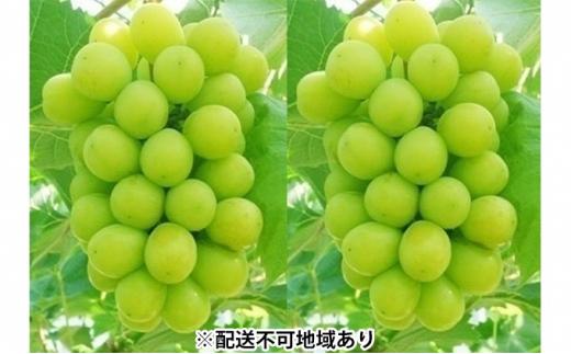 [№5220-0469]岡山県産 シャインマスカット『晴王』2房(合計約1.1kg)