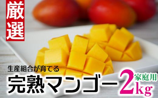 生産組合が育てる厳選・完熟マンゴー約2kg(家庭用)