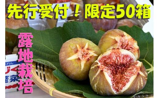 CP-008【先行受付!限定50箱】新鮮朝採りいちじく1.5kg[高糖度・露地栽培]